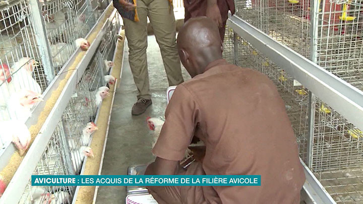 les acquis de la réforme de la filière avicole en Côte d'Ivoire
